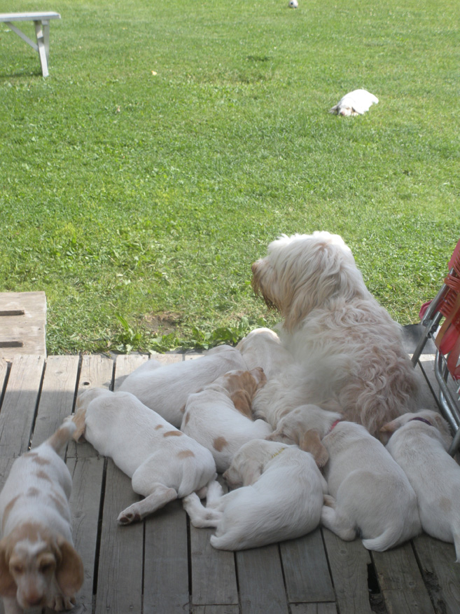 Lily With Pups 2010